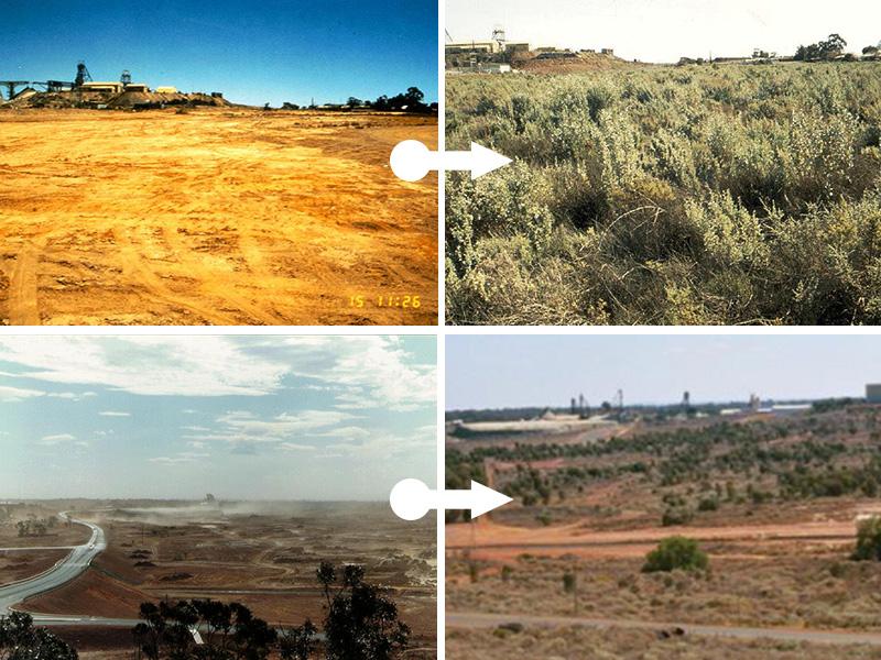 Примеры работ по рекультивации земель: было и стало
