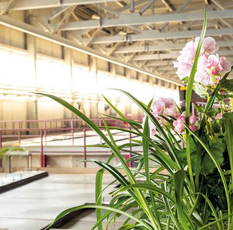 В цехе «Уралгидромеди» есть свой ботанический уголок — небольшой зимний сад, который цветет с момента запуска производства. Это своеобразный символ экологической безопасности завода