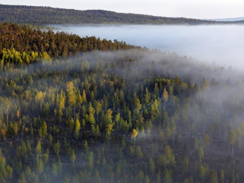 «Инсайт-проект»: компенсационное лесовосстановление в надёжных руках